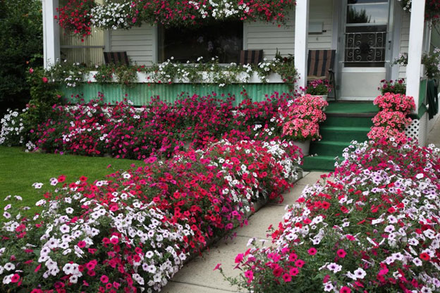 Curb Appeal - Great Plants for the Exterior of Your Home